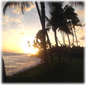 Maui palm trees